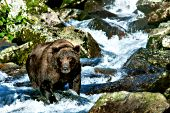 Alaskan brown bear fishing at a waterfall